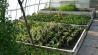 pflanzenanzucht-2